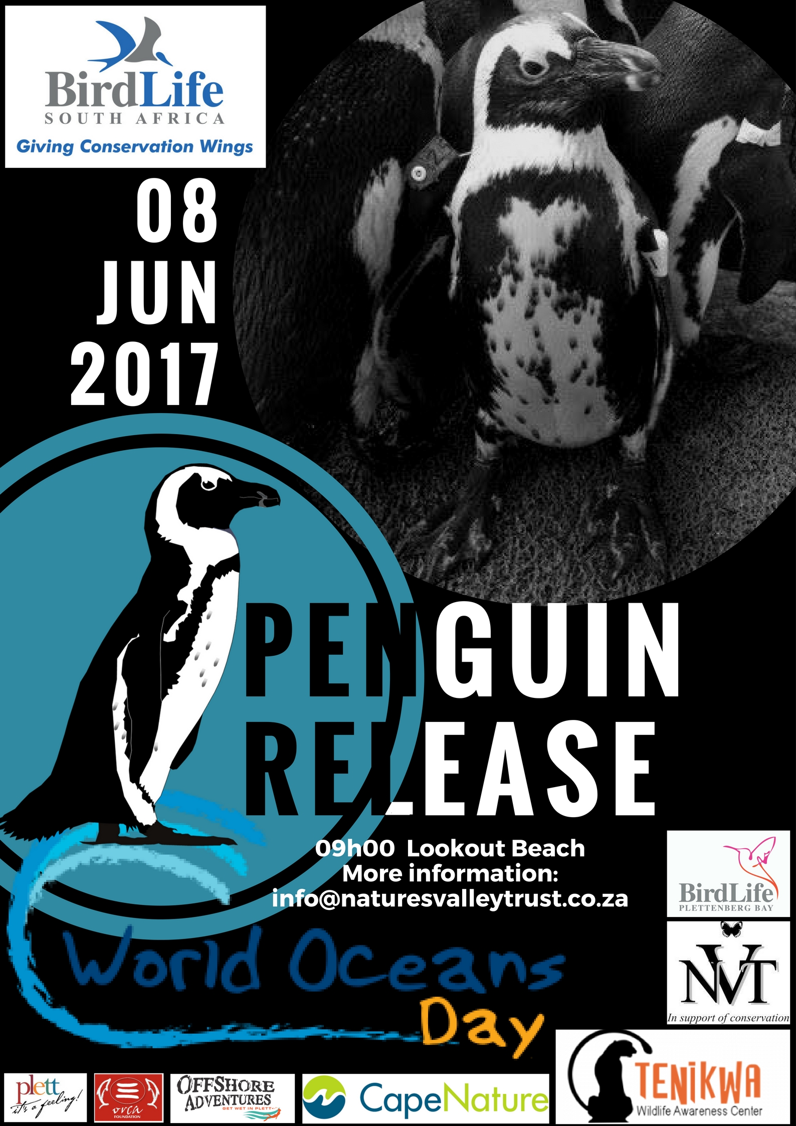 Release of African Penguins in Plettenberg Bay  on World Oceans Day
